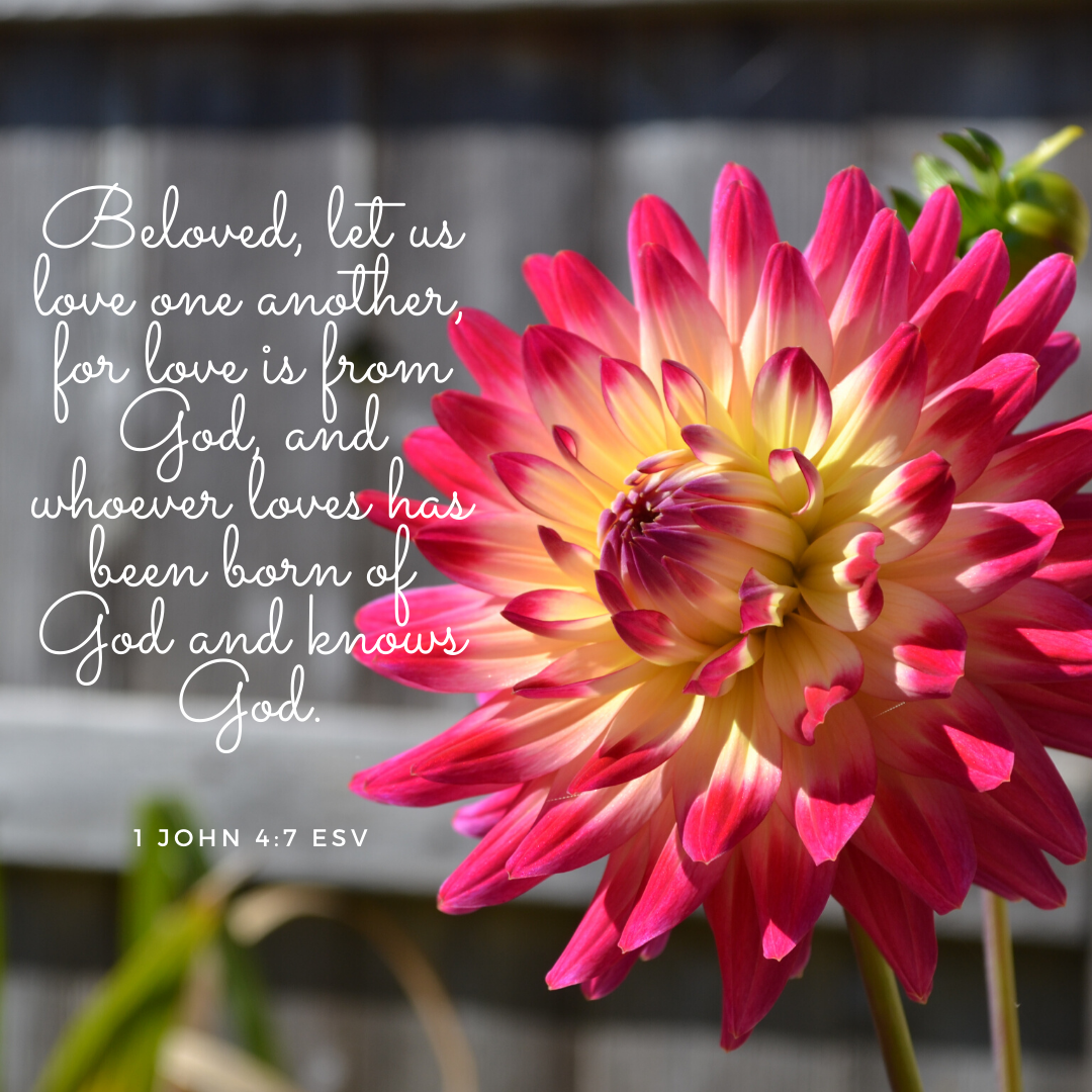 Beloved, let us love one another, for love is from God, and whoever loves has been born of God and knows God.