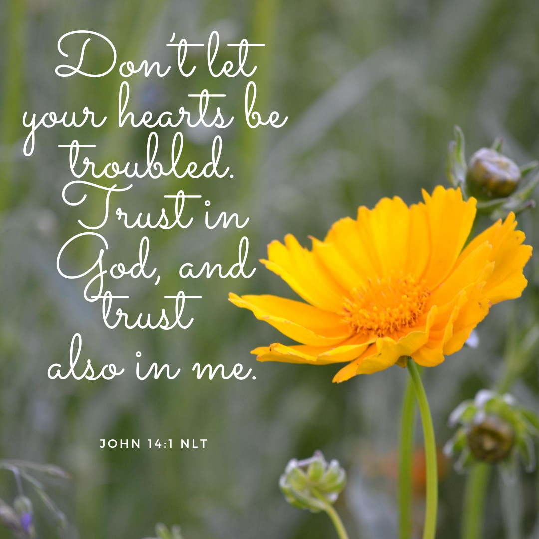 love and joyDon't let your hearts be troubled. Trust in God, and trust also in me.