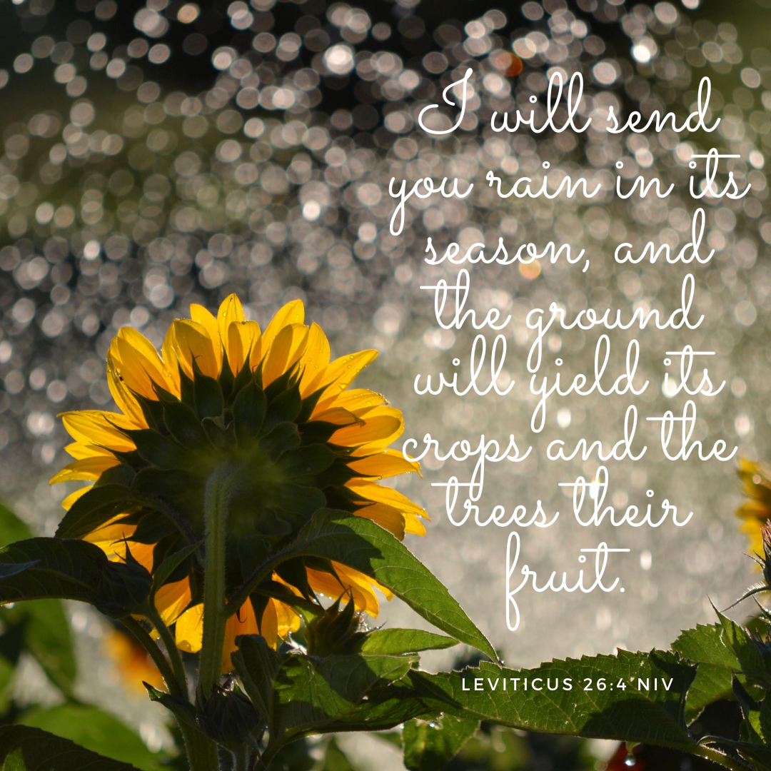 love and joyI will send you rain in its season, and the ground will yield its crops and the trees their fruit.